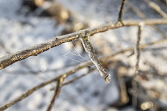 Close up of an frozen branch with a spider web (Tamara Lopes photographer) Tags: abstract branch closeup cold cool covered crystals day december detail europe forest frost frosting frosty frozen grass ice icecrystals icy macro macroshot natural nature norway outdoor plant season snow spiderweb sun temperature texture tree water white winter winterlandscape yellow