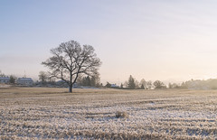A lonely tree in a field during the winter (Tamara Lopes photographer) Tags: alone background branch cold day environment farmland field fieldtree fog frost frozen hoarfrost landscape lonely nature norway one outdoor peaceful quiet rural scene season single sky snow stunning sun sunny sunrise travel tree treesnow weather winter wintry