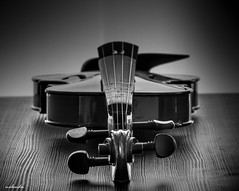 Still Life Photography (Nabendu Das Gupta) Tags: violin stillife monochrome tabletop naturallight 550d kitlens