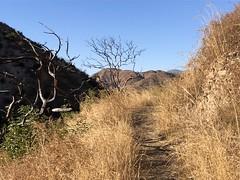 IMG_6980 (Kent MacElwee) Tags: losangeles la hiking nela northeastlosangeles socal southerncalifornia ca usa