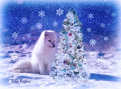 Snow Fox (brillianthues) Tags: snow winter cold holiday christmas flakes tree blue colorful collage photography photmanuplation photoshop