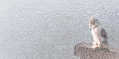Frosty Cat (Scott David Smith) Tags: cat fujifilm fuji animalportraits winter impressionistic