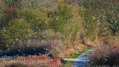 Envolée d'étourneaux... (Crilion43) Tags: réflex france objectif vol divers nature centre canon paysages arbres route feuillesfeuillage véreaux gazon cher région oiseaux matérielphoto herbe tamron animaux 1200d villes