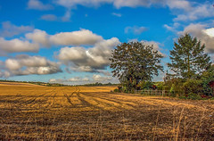 Autumn landscape (fotosforfun2) Tags: autumn seasons landscape tree nature england britain uk green yellow orange sky blue clouds field view country county countryside