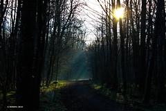 Im Wald - In the woods (holdinghausenm) Tags: wald forst forest foret woods baum bäume trees albero alberi arbre sonne sol sole soleil raysoflight raysofthesun view yourwonderland vanagram sunburst sunlight morning silhouette licht outside sonnenstrahlen morgen