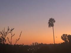 fullsizeoutput_69a4 (Kent MacElwee) Tags: losangeles la highlandpark nela socal southerncalifornia usa ca sunset northeastlosangeles dtla downtownlosangeles palmtree evening colorful sky