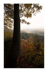 autumn my friend (kevinaki) Tags: switzerland zurich uetlberg what view trees colors leafes fujifilm xh1 moody mist