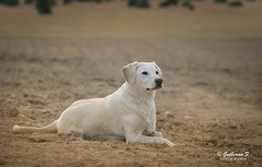 my dog (guillermo_fernandez) Tags: animales coke perros nikon nikonistas d700 color