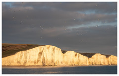 Chalk Cliffs (Mandy Willard) Tags: sevensisters gulls cliffs chalk sea beach seascape