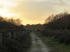 The Hague, Solleveld (Elisa1880) Tags: solleveld den haag the hague nederland netherlands landscape landschap