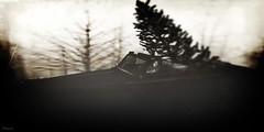 lost...xmas  ( by: GlitterPrincess Destiny )~Storie's~ (GlitterPrincess Destiny (in SL) Black Label Exhibi) Tags: secondlife avatar car christmas xmas tree ghost woods fog dream jamiencells glitterprincess destiny stories lost monochrome bw flickr story