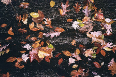 Autumn Shower (Jetcraftsofa) Tags: olympustrip35 zuiko4028 sunpak20sr kodak ultramax400 35mm filmphotography compactcamera pointandshootcamera analogcamera flashphotography wetleaves autumn fall rainshower slate shale sparkle rock