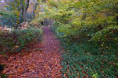 Sussex Woodland (Adam Swaine) Tags: woodland woodlandfloor autumn autumncolours autumnviews leaves uk ukcounties walks sussex counties countryside adamswaine 2019 trees flora lichen moss beautiful britain british seasons