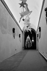 Camminando verso il Natale (michele.palombi) Tags: 800asa film35mm analogicshot natale
