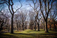A Walk in the Park (Phil Roeder) Tags: newyorkcity manhattan nyc centralpark park canon6d canonef24105mmf4lisusm