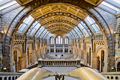 Natural History Museum (michael_d_beckwith) Tags: nhm natural history museum london england english british european museums interior interiors inside architecture architectural building buildings place places famous landmark landmarks great hall halls room rooms arch arches pretty pritty beautiful ornate decorated decor 4k 5k uhd stock free public domain creative commons zero o hires pic picture photograph photo large tourism heritage michaeldbeckwtih michael d beckwith michaeldbeckwith sight seeing