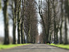 THE BIG TREES IN LURGAN PARK CO ARMAGH (Monkiiiey Henry Clark) Tags: the big trees in co armagh