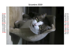 December 2019 (Alfredo Liverani) Tags: europa europe italia italy italien italie emiliaromagna romagna faenza faventia faience animal kitten gatto gatta gatti gatte cat cats chats chat katze katzen gato gatos pet pets tabby furry kitty moggy moggies gattino animale ininterni animaledomestico aliceellen alice ellen calendario calendar kalender canong5x canon g5x pointandshoot point shoot ps flickrdigital flickr digital camera cameras