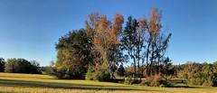 Slowly dwindling island of trees (readerwalker) Tags: trees tallahassee greenways parks