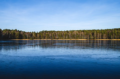 Winter landscape of the lake without snow. (ivan_volchek) Tags: air background beach beautiful beauty botany cold day december environment flora foliage forest fresh frost frosted frozen holiday horizon ice lake landscape natural nature outdoor outdoors park reeds river snowy travel tree trees water weather white wild winter withoutsnow