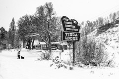 Eastern Sierra Snow Storm, Lee Vining, California (paccode) Tags: solemn d850 landscape snowstorm sierranevada bushes brush blackwhite quiet hills winter snow creepy trees street forgotten people monochrome california hotel house dog motel scary tree candid serious mountain leevining unitedstatesofamerica