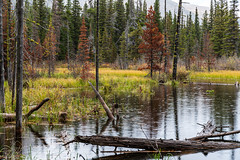Beaver Pond Aster Falls Trail - Glacier National Park (j-rye) Tags: fall glaciernationalpark ilce7rm2 landscape montana a7rm2 beaverpond colors mirrorless nature rain sony sonyalpha tamron2875 trees