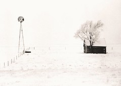 440 - North of Loomis No. 2 - Lith Print (Brad Renken) Tags: blackandwhite 35mm film kodakdirectpositive minolta srt 201 vivitar 70210 4556 macro caffenol stand cl lith arista kodak kodabrome f1 glossy phelps loomis nebraska nebr neb ne inexplore