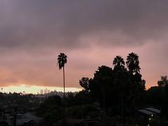 fullsizeoutput_a1f7 (lnewman333) Tags: highlandpark losangeles dtla downtownlosangeles ca usa socal southerncalifornia palmtree sunset nela northeastlosangeles