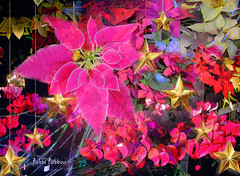 December Flowers (brillianthues) Tags: december poinsettias stars flowers floral holiday winter colorful collage photography photmanuplation photoshop