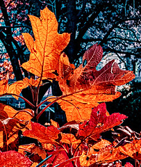 Colors of Autumn 2019 (nrhodesphotos(the_eye_of_the_moment)) Tags: dsc11283001084 wwwflickrcomphotostheeyeofthemoment theeyeofthemoment21gmailcom autumn season flora plantlife nature bokeh outdoors nyc manhattan museumofnaturalhistorypark colorsofautumn leaves texture patterns trees nycparklovers
