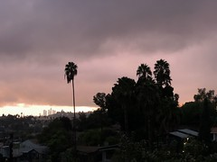 fullsizeoutput_a1f9 (lnewman333) Tags: highlandpark losangeles dtla downtownlosangeles ca usa socal southerncalifornia palmtree sunset nela northeastlosangeles
