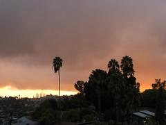 fullsizeoutput_a1fa (lnewman333) Tags: highlandpark losangeles dtla downtownlosangeles ca usa socal southerncalifornia palmtree sunset nela northeastlosangeles
