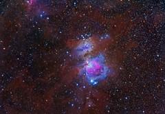 Orion Nebula & Dust Widefield (D_McGarvey) Tags: astrophotography astro nightsky nebula orion orionnebula