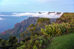 _5D39541 (dendrimermeister) Tags: kauai hawaii waimea canyon scenery landscape color napali coast
