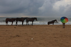 Mahabalipuram Beach 2019 (dr.subhadeep mondal's photography) Tags: subhadeepmondalphotography seabeach mahabalipuram india indianstreet life canon streetphotography color tamilnadu monsoon animal