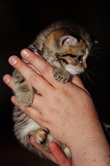 kitten (Сonstantine) Tags: cats catslife catsoftheworld cat catscatscats kitten kittens meowmeow meow meowbox photo pic cute