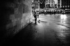 walking the dog (gato-gato-gato) Tags: leica leicammonochrom leicasummiluxm35mmf14 mmonochrom messsucher monochrom schweiz strasse street streetphotographer streetphotography suisse svizzera switzerland zueri zuerich zurigo black digital flickr gatogatogato gatogatogatoch rangefinder streetphoto streetpic streettogs tobiasgaulkech white wwwgatogatogatoch zürich kantonzürich manualfocus manuellerfokus manualmode schwarz weiss bw monochrome blanc noir strase onthestreets mensch person human pedestrian fussgänger fusgänger passant sviss zwitserland isviçre zurich fuji fujifilm fujix x100 x100p pointandshoot autofocus