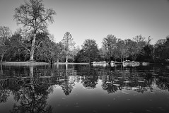 Bäume am See (KaAuenwasser) Tags: bäume baum holz stämme schlossgarten schlossgartensee karlsruhe wasser landschaft bw schwarzweis schwarz weis kontrast spiegelung herbst kahl jahreszeit licht schatten