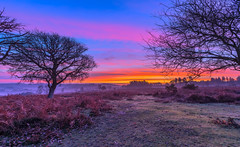 Misty Dawn (nicklucas2) Tags: cloud cold dawn landscape newforest hampshire mogshade tree silhouette mist