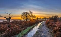 Frozen Path (nicklucas2) Tags: cloud cold sunrise sun sunburst landscape newforest hampshire mogshade tree