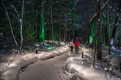 walkin in a... (Brian M Hale) Tags: walkin walking winter wonderland outside outdoor fairy lights christmas holiday snow trail path botanic botanical garden tower hill boylston ma mass massachusetts newengland usa brian hale brianhalephoto night