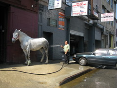 Washing the horsepowers in Manhattan (chipje) Tags: street manhattan newyork horse cars garage man hosepipe 38thstreet