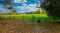 Attingham Park View to The Wrekin (Bob.W) Tags: attinghampark shrewsbury shropshire nationaltrust sunrays5 coth5
