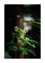 This work is 5/12 works taken on 2019/10/26 (shin ikegami) Tags: sony ilce7m2 a7ii sonycamera 50mm lomography lomoartlens newjupiter3 tokyo 単焦点 iso800 ndfilter light shadow 自然 nature naturephotography 玉ボケ bokeh depthoffield art artphotography japan earth asia portrait portraitphotography