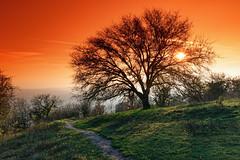 Crest path (hbensliman.free.fr) Tags: travel france landscape nature outdoor outside winter season europe pentax pentaxart pentaxk1 sunrise sunset hills tree