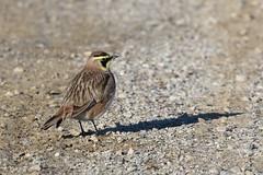 191205potd (NCPR) Tags: ncprpotd fa19 vermont wildlife birds
