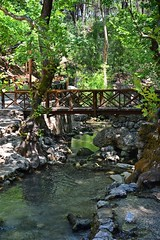 wooden bridge :) (green_lover (your COMMENTS are welcome!)) Tags: bridge stream trees eptapiges rhodes greece stones green creek water