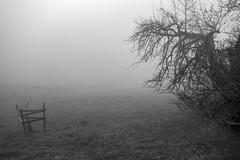 MOTHER & CHILD or HUNTER & VICTIM (LitterART) Tags: family trees mist tree nebel bäume baum familienaufstellung motherandbaby mutterundkind motherandchild