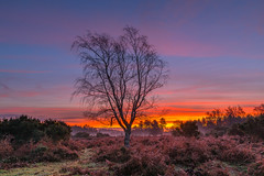 Dawn Silhouette (nicklucas2) Tags: cloud cold dawn landscape newforest hampshire mogshade tree silhouette
