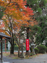 Fall colors in front of Takano Shrine (Greg Peterson in Japan) Tags: shiga takano 植物 滋賀県 栗東市 plants ritto japan foliage 紅葉 shigaprefecture